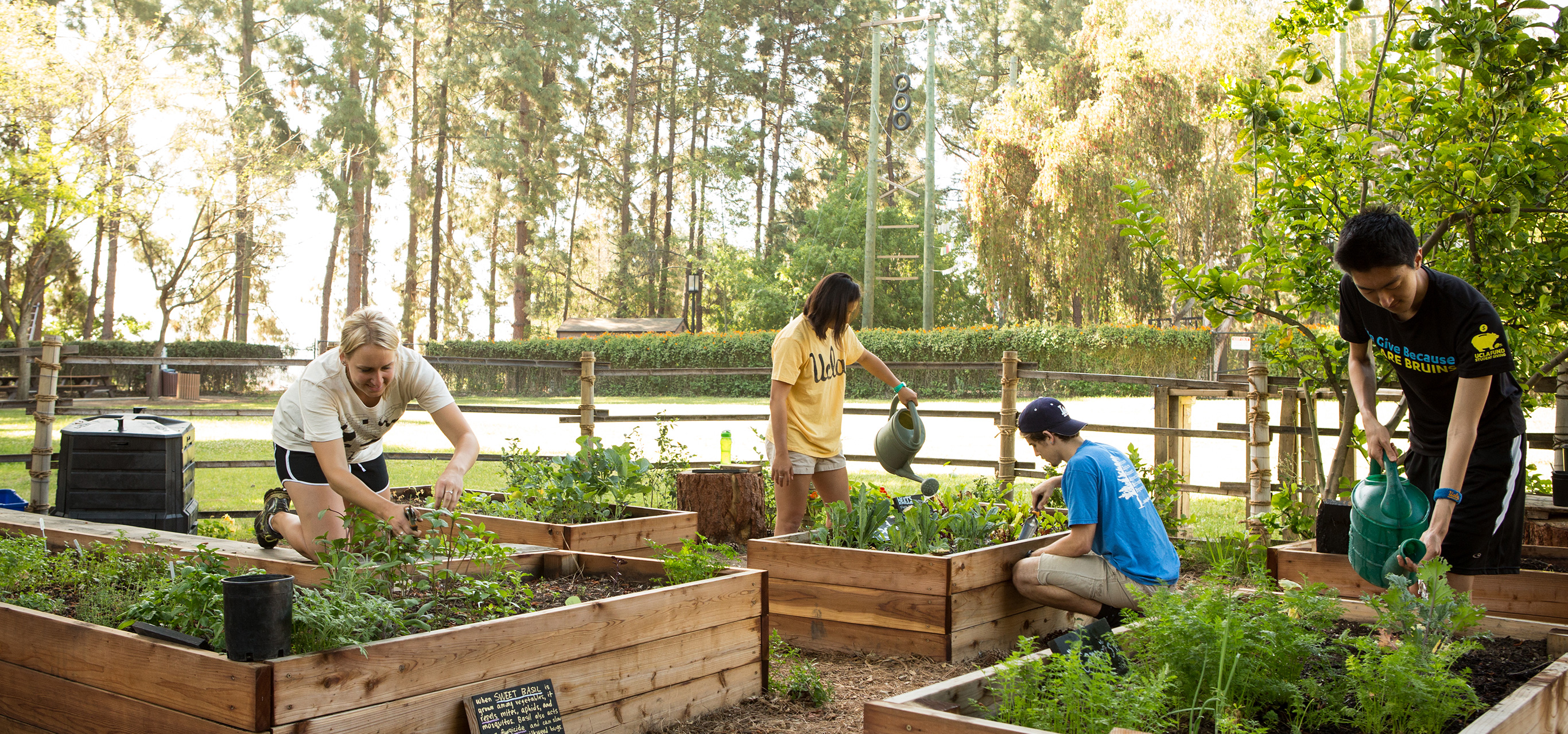 Students care for plants in the organic garden on campus.